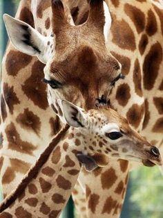 animal kids 8 Daily Awww: Animal mommas and poppas love their lil ones (30 photos)