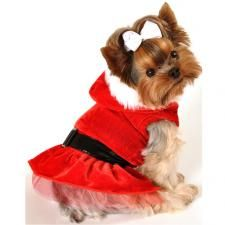 Come on, it doesn't get much cuter than this! A Santa Dress is a great way to include your pooch in the holiday festivities! #cute #christmas #holiday #pets