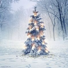 Julia Popova   #winter #christmas #snow