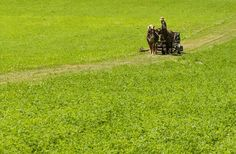 Amish farmer Samuel Zook - By studying the immune systems of plants, they've developed a technique that eliminates the need for chemicals.