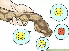 Care for Ball Pythons