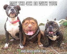 "1,477 Likes, 25 Comments - Lisa Reilly (@loveabulllisa) on Instagram: ""Star Wars day on a TBT?!? #heaven #Ididntchoosethenerdlife #thenerdlifemarriedme #starwars…"""