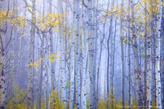 Autumn Forest Autumn Forest, Forests, Wolf, Trees, Painting, Inspiration, Image, Photos, Biblical Inspiration