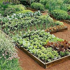 Learn exactly how to plan your first vegetable garden with this step by step guide! Discover what tools you need, how to plan your vegetable garden layout, determining the perfect spot for your garden and which vegetables grow best depending on the season and region. #Toolsforyourvegetablegarden #gardeningplanslayout