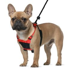 Mesh Anti Pull Harness ** You can find out more details at the link of the image. #DogHarnesses