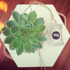 Echeveria Coolvue Kokedama  #kokedama #echeveria #coolvue #succulents #gardening #gardenart #livingart #naturalart #gardendecor #stringgarden #hanginggarden #succulentart