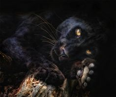 Into the wild: dangerous animals wildlife photography Big Cats, Cool Cats, Cats And Kittens, Beautiful Cats, Animals Beautiful, Cute Animals, Simply Beautiful, Wildlife Photography, Animal Photography