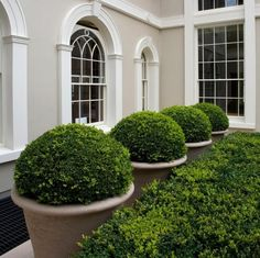 we have awesome artificial boxwood balls and faux boxwood hedge panels.check out my boards!we have awesome artificial boxwood balls and faux boxwood hedge panels.check out my boards! Boxwood Landscaping, Boxwood Garden, Garden Planters, Backyard Landscaping, Boxwood Hedge, Boxwood Planters, Inexpensive Landscaping, Modern Landscaping, Backyard Patio