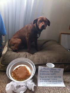 Dog Shaming: EPIC WIN ...this mom deserves another Pumpkin pie!