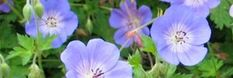 www.perennials.com  Great extensive list of perennials and cultivars and an advanced search feature that helps find the plants for your exact situation.