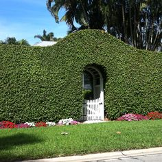 Gorgeous hedge in Naples, FL