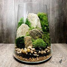 9 Types of Tortoises and Their Diets Mini Terrarium, Succulent Terrarium, Bottle Garden, Glass Garden, Paludarium, Bonsai Garden, Bonsai Trees, Container Plants, Small Gardens