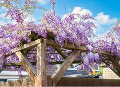 climbing plants Climbing Hydrangea, Climbing Flowers, Climbing Vines, Lawn And Garden, Garden Beds, Fast Growing Vines, Autumn Clematis, Bloom Where Youre Planted, How To Attract Hummingbirds
