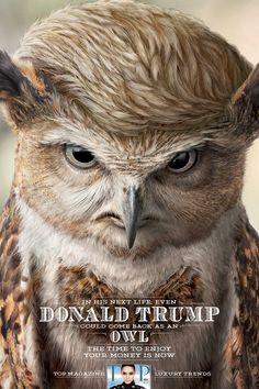 """Donald Trump - Owl """"The time to enjoy your money is now"""", meint das Luxus-Magazin Top. Denn wenn man als Tier wiedergeboren wird, kann man sein Geld relativ schlecht ausgeben."""