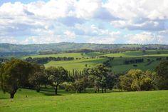 Orange NSW Golf Courses, Scenery, Australia, Orange, Country, Live, Photography, Fotografie, Paisajes