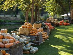 Jerseydale Ranch Pumpkin Patch - Yosemite Experience