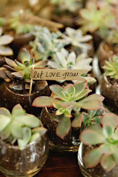 Let love grow. Succulent wedding favors.