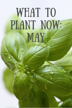 May is the first month of the year when the risk of frost dwindles, making it the ideal time to plant lots of crops. Here are my top picks.