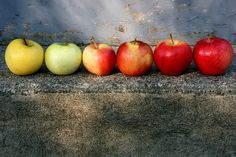 the whole spectrum of apples