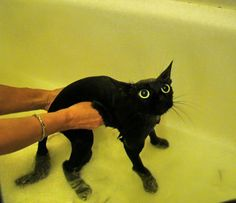 bath,bath,...