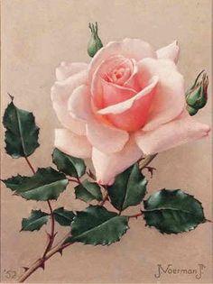 Jan Voerman jr Dutch - A Rose oil on canvas 21 5 x 17 cm Beautiful Rose Flowers, Amazing Flowers, Design Floral, Arte Floral, Flower Pictures, Flower Wallpaper, Botanical Art, Vintage Flowers, Watercolor Flowers