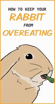 That's what rabbits do all day long. They'll gobble up their food and then keep looking at you and begging for more. Pet Bunny Rabbits, Meat Rabbits, Raising Rabbits, Diy Bunny Cage, Bunny Cages, Rabbit Diet, Rabbit Eating, Rabbit Playpen, Rabbit Behavior