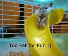 Too fat for fun :( lol Story of my life hahaha