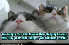 2 Hungry Cats