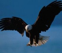 Mount Up With Wings Like Eagles
