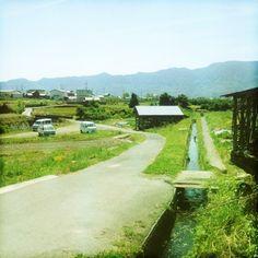 The Komeichi farm in Wakayama, Japan