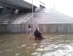 Собака помогает хозяину-инвалиду Dog helps the owner Russian Dog Pushes Owner in Wheelchair through flooded street - Video Russian Dogs, Animal Help, Elderly Man, Work With Animals, Mans Best Friend, Dog Pictures, Funny Dogs, Best Dogs, Dog Cat