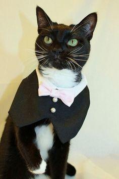 Pet Wedding Fashion - Paws-itively Stylish