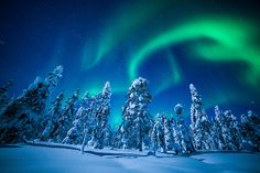 The Northern Lights blaze above the snowy forests of Finnish Lapland.