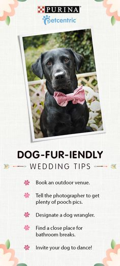 Sign up for our newsletter to get more dog fur-iendly tips! A wedding isn't complete without family & friends – especially the furry four-legged ones! To get your best bud involved in your big day plan an outdoor wedding and tell the photographer(s) beforehand so they can plan plenty of pooch pics. Don't forget to designate a dog wrangler to help with feeding, safety and bathroom breaks. Brought to you by Petcentric, a Purina brand and your trusted source for helpful tips & fun facts.