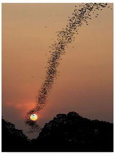 Trademark Global Jean De Spiegeleer 'Bat Swarm At Sunset' Canvas Art - 35 x 2 x 47 Beautiful Sunset, Beautiful World, Cool Pictures, Beautiful Pictures, Inspiring Pictures, Amazing Photos, Funny Pictures, Sunset Canvas, Belle Photo
