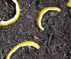 nine jardiniers sur 10 ne connaissent pas ces astuces Permaculture, Outdoor Gardens, Garden Online, Horticulture, Outdoor Gardens Design, Growing Greens, Garden Hacks Diy, Gardening Tips, Vegetable Garden