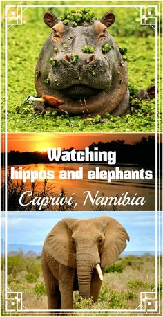 Complete guide to Caprivi strip, Namibia, plus Chobe park (Botswana) and Vic Falls. Best National parks, campsites, road trip tips, border crossing and more!