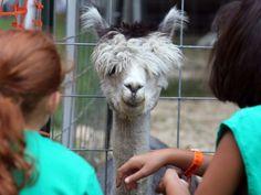 PHOTOS: Middlesex County Fair Day 2