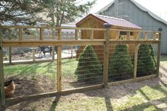 nice fence for chicken yard.  but does it need to be this tall for clipped wings?