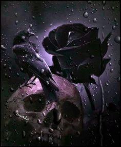 Skull raven black rose