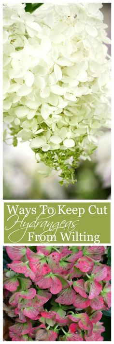 HOW TO KEEP CUT HYDRANGEAS FROM WILTING-Easy ways to keep hydrangea blooms fresh and full!-stonegableblog.com