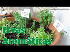 Ervas Aromáticas • Como fazer uma Mini Horta com Ervas Aromáticas • www....