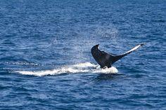 verogran_whale2
