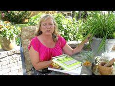 Grow lemongrass in a pot - YouTube