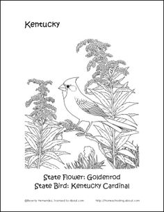 kentucky state bird coloring pages | Missouri State Quarter Coloring Page | USA State Quarters ...
