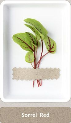 My Favourite! Micro Herbs, Fruits And Vegetables, Green, Plants, Diy, Beauty, Ideas, Fruits And Veggies, Bricolage