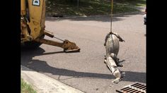 Alligators removed from Jacksonville drain