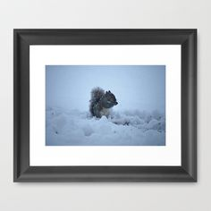 Squirrel in Snow - Series by Sarah Shanely Photography $31.00