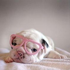 Perrito hermoso con anteojos ja !!