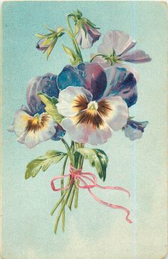 bunch of blue/white/purple pansies tied with pink ribbon